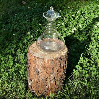 Karaffe Alladin auf Baumstumpf